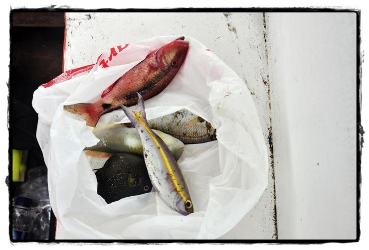 지바포인트 물고기.jpg