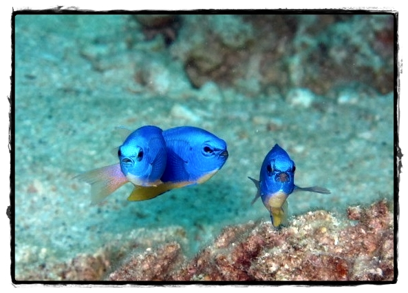 귀여운 물고기.jpg